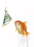 Goldfish y dólar Fotografía de archivo