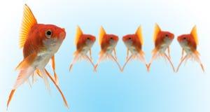 goldfishes ηγέτης Στοκ φωτογραφία με δικαίωμα ελεύθερης χρήσης