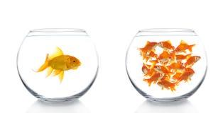 goldfishes шаров Стоковое фото RF