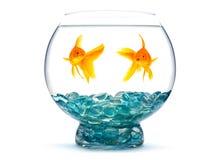 goldfishes Στοκ Εικόνες