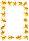 Goldfishes Royalty Free Stock Images