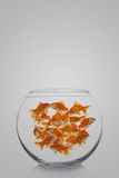 Goldfishes Royalty Free Stock Photo