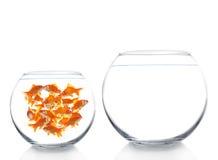 Goldfishes Royalty Free Stock Photos