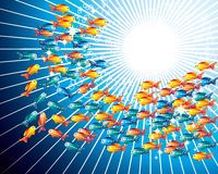 Goldfishes Royalty Free Stock Image
