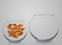 Goldfishes in a bowl Royalty Free Stock Images