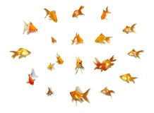 Goldfishes cómodos fijados imagenes de archivo