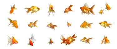 Goldfishes cómodos fijados Fotos de archivo libres de regalías
