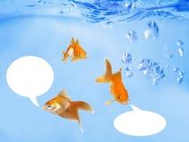 Goldfishes cómodos que hablan bajo ondas Foto de archivo libre de regalías