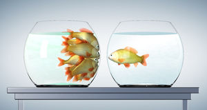 Goldfishes in cramped aquarium Royalty Free Stock Photography