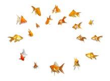 goldfishes d'attention d'annonce payant le positionnement image stock