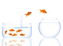 Goldfishes in der Warteschlange Stockbild