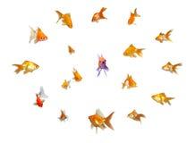 Goldfishes fijados - dirección Foto de archivo