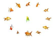Goldfishes fijados - dirección Fotos de archivo libres de regalías