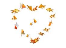 Goldfishes (fondo en forma de corazón del marco) Imagen de archivo libre de regalías