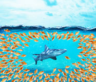 Goldfishes group surround the shark. Concept of unity is strenght,teamwork and partnership Royalty Free Stock Photo