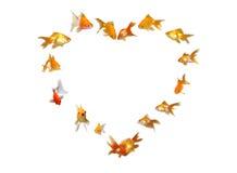 Goldfishes (Heart Shaped Frame Background). Goldfishes Set (Heart Shaped Frame Background) - Wedding Invitation - Many beautiful goldfishes isolated on white stock photography