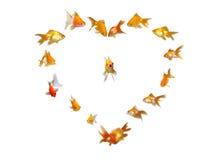 Goldfishes (Heart Shaped Frame Background). Goldfishes Set (Heart Shaped Frame Background) - - Wedding Invitation Singing - Many beautiful goldfishes isolated on royalty free stock photography