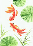 Goldfishes among the lotus leaves. Asian style original painting Royalty Free Stock Images