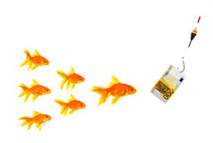 Goldfishes and money. On a white background Royalty Free Stock Photos