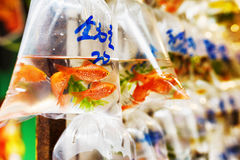 Goldfishes in plastic bags Royalty Free Stock Photo