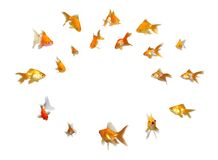 Goldfishes Set - Announcement! Paying Attention! Stock Image