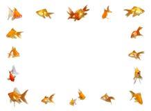 Goldfishes Set (Frame Background) Stock Photo