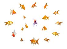 Goldfishes Set - Leadership Stock Photo