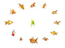 Goldfishes Set - Leadership Royalty Free Stock Photos
