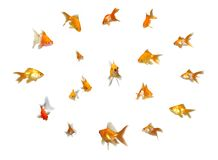 Goldfishes Set - Leadership Royalty Free Stock Images