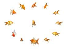 Goldfishes Set (Uniqueness). Many beautiful goldfishes isolated on white background (can be used individually stock photo