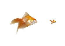 Goldfishes - Unfair Competition, Monopoly Stock Images
