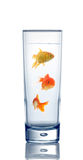 Goldfishes in a water glass Royalty Free Stock Images