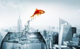 Goldfishherausspringen des Wassers stockbilder