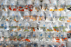 Goldfishmarket in Hong Kong Royalty Free Stock Photography