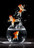 Goldfishs jumps stock photos