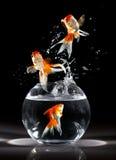 goldfishs skoki Zdjęcia Stock
