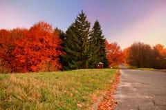 Goldherbst Einige Bäume und Blätter Stockbilder