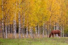 Goldherbst Einige Bäume und Blätter Lizenzfreies Stockbild