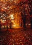 Goldherbst Einige Bäume und Blätter Lizenzfreie Stockbilder
