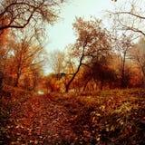Goldherbst Einige Bäume und Blätter Stockfotografie