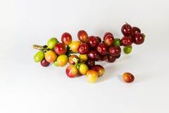 Goldkaffee Stockfotografie