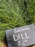 Goldkrone Dill Stock Photography