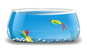 Goldlfish nell'illustrazione del fishbowl Immagine Stock