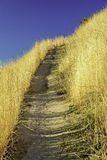 Goldnen grass of the fall line a dirt trail Stock Images