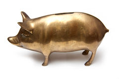 Goldpiggy Querneigung Stockbild