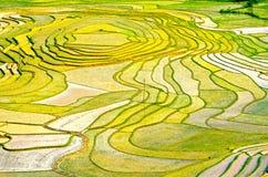 Goldreisterrassen von Baping lizenzfreie stockfotografie