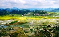 Goldreisterrassen von Baping Stockfotos