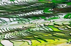 Goldreisterrassen von Baping stockfotografie