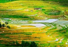 Goldreisterrassen von Baping lizenzfreie stockfotos
