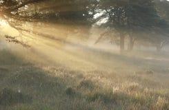 Goldsonnenstrahlen am nebeligen Morgen des Herbstes stockfotografie